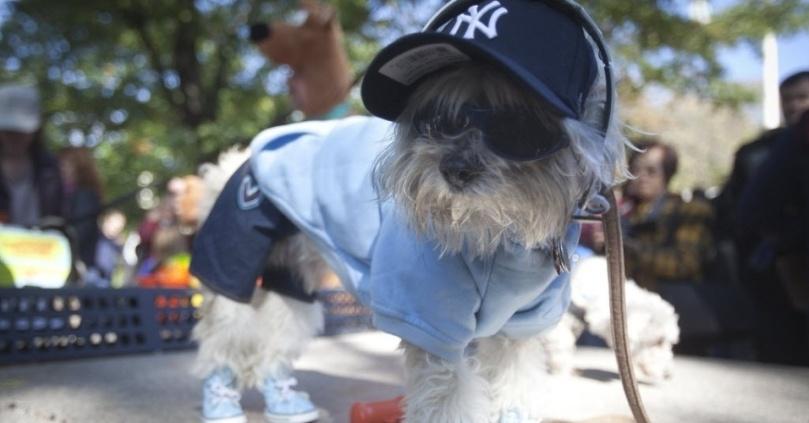 25out2014---cachorro-fantasiado-participa-da-dog-parade-de-halloween-na-tompkins-square-em-nova-york-neste-sabado-25-centenas-de-donos-de-caes-vestem-os