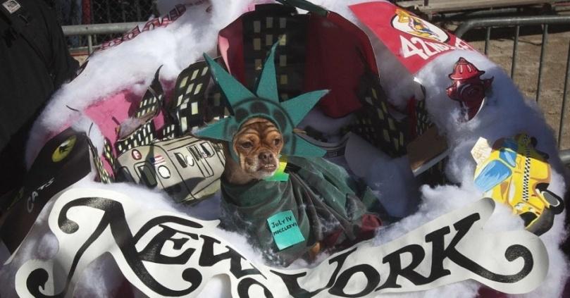 25out2014---cachorro-vestido-como-a-estatua-da-liberdade-participa-da-dog-parade-de-halloween-na-tompkins-square-em-nova-york-neste-sabado-25-centenas-d