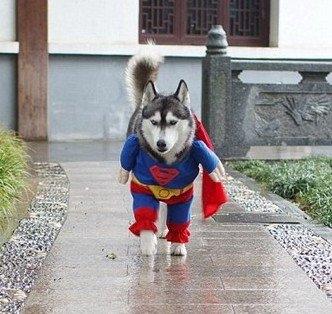fantasia-super-men-pet-super-luxo