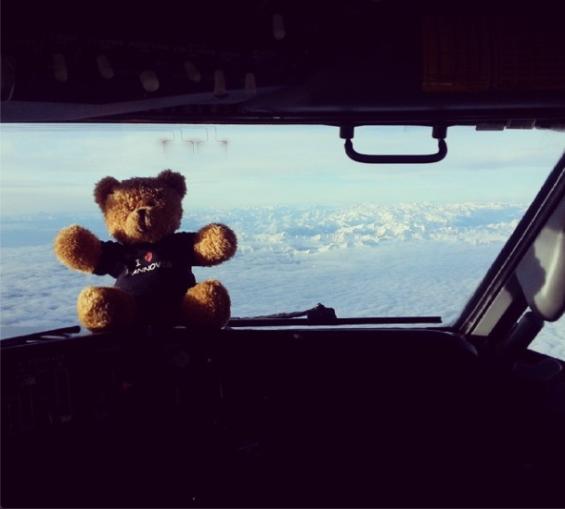 teddy 8