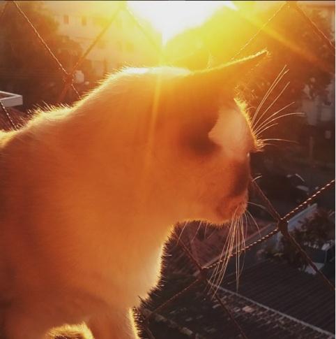 tom sol